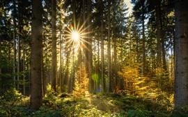 Vorschau des Hintergrundbilder Wald, Bäume, Sonnenstrahlen, Blendung, Herbst