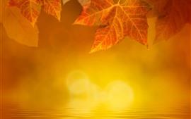 Outono dourado, folhas de plátano, água, nevoeiro