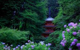 Kyoto, Japão, hortênsia rosa, árvores verdes, torre