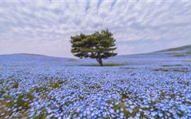 壁紙のプレビュー 孤独な木、多くの青い花