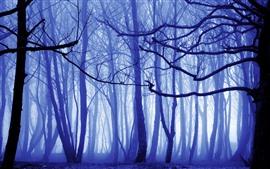 壁紙のプレビュー 朝、森、木、霧、ライトブルー