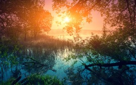 미리보기 배경 화면 아침, 호수, 나무, 잔디, 일출, 아름다운 자연 풍경