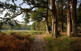 Aperçu fond d'écran Pays-Bas, arbres, herbe, forêt, automne