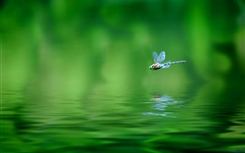 Preview wallpaper One dragonfly, flight, water, green