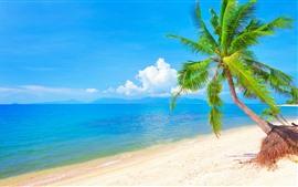 壁紙のプレビュー ヤシの木、青い海、ビーチ、雲、熱帯の