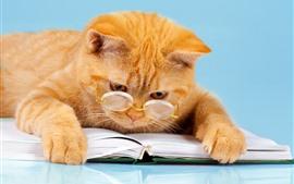 Libro de lectura de gato naranja, gafas, animal divertido