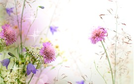 Flores cor-de-rosa, cornflowers, sinos, brilho