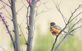 Preview wallpaper Pink flowers, tree, sparrow, bird, spring