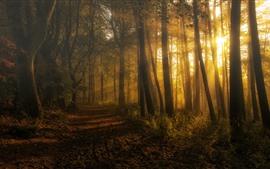 Vorschau des Hintergrundbilder Schottland, Wald, Bäume, Sonnenstrahlen, Morgen