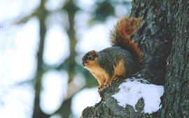 Preview wallpaper Squirrel, snow, tree, hazy