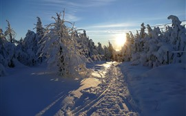 Preview wallpaper Thick snow, trees, winter, sunrise, morning, shadow