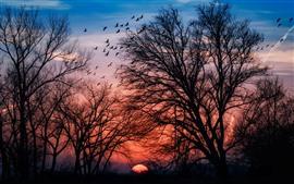 Aperçu fond d'écran Arbres, oiseaux, silhouette, coucher de soleil