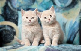 Aperçu fond d'écran Deux chaton mignon, visage, regarder