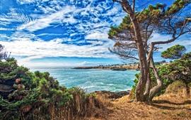 Vorschau des Hintergrundbilder USA, Meer, Bäume, Gras, blauer Himmel, Wolken