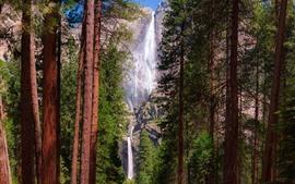 Parque Nacional de Yosemite, Cachoeiras, Árvores, EUA